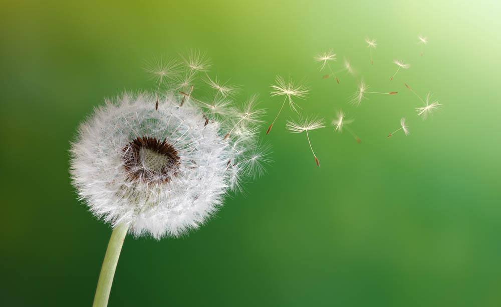 Polline che crea allergie